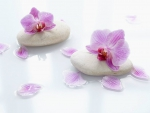 Orchids on Smooth Stone