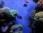 Beautiful Corals & Fish