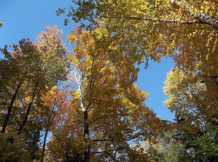 Autumn in Maine - leaves, autumn, Maine, fall, sky, trees
