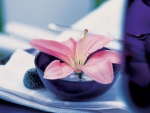Pink Flower in a Bowl