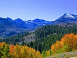 Fall Colors in the Sierra Mountains