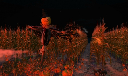 haunted cornfield stalks cornfield corn hat field halloween jack - Halloween Corn Stalks