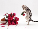 tabby kitten playing with a flowers