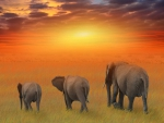 amazing elephant family