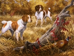 Brittany Spaniels F1