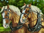 Draft Horse Team F1