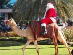 Santa claus on the camel