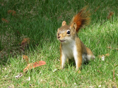 Funny squirrel funny wallpapers and images desktop - Funny squirrel backgrounds ...