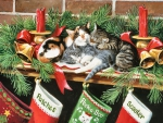 Stockings for the Kitties F1