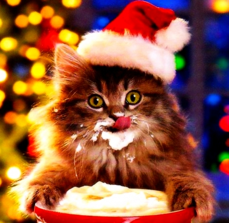 cappuccino christmas cats amp animals background