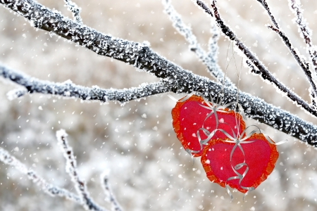 536 best images about Hearts In Nature on Pinterest   Hearts In Nature Winter