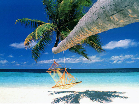 Relax - Hammock Hanging from Palm Tree - relax, hammock, palm tree, ocean