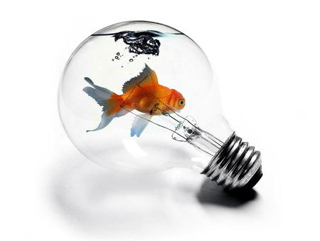 Goldfish in a Lightbulb - goldfish, fish in a lightbulb, lightbulb