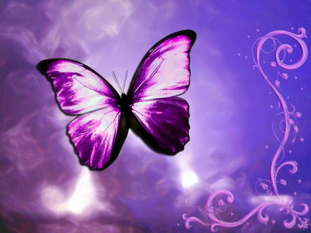 Purple Butterfly - butterfly, purple, purple butterfly