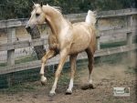 Beautiful Mare