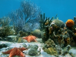 Starfish and Corals on Seabed