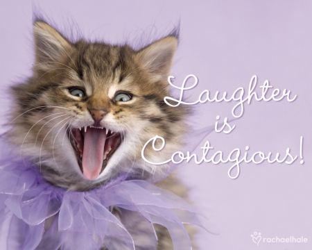 contagious laughter purple cat funny