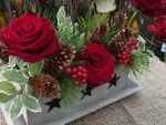 Roses for the Holidays ✩✩✩