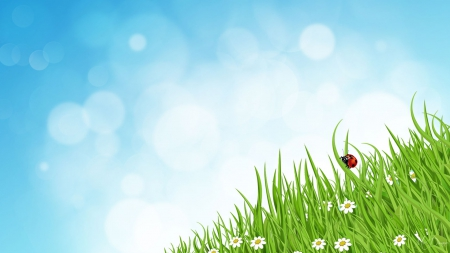 Ladybug in Grass - lady bug, ladybug, summer, bokeh, grass, flowers, sky, spring, daisies