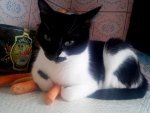 A cat on a carrot