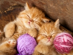 Adorable Kittens ♥