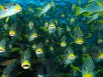 School of tropical fish