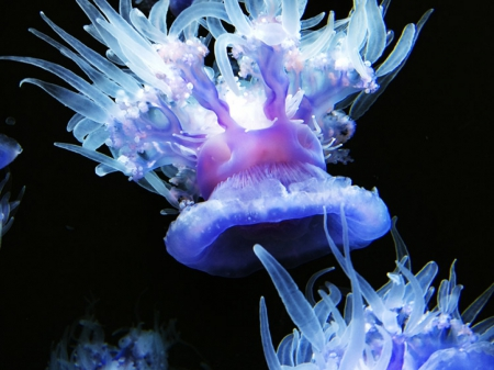 Brightly-Colored Neon Jellyfish - jellyfish, sea life, underwater, nature