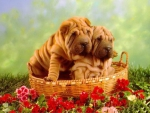 Two Lovely Puppies on the Basket