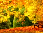 Bench Under Spectacular Yellow Tree