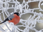 Winter Bird on the Snowy Branch