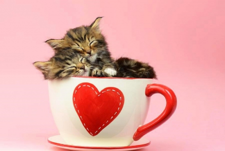 valentines it must be love kittens heart colors animals beloved - Valentines Animals