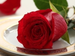 Red Rose on a Plate