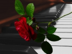 ~*~ Piano Red Rose ~*~