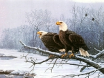 Eagle pair near snowy river
