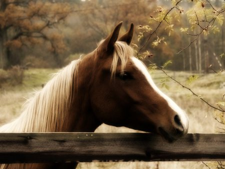 Autumn Horse - trees, horse, fence, field, Fall, autumn