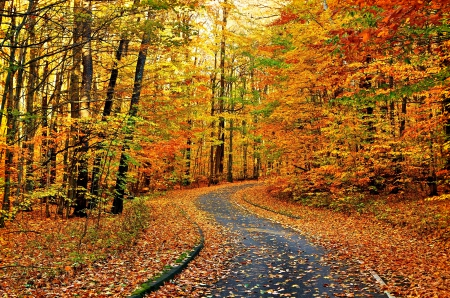 AUTUMN FOREST ROAD - branches, leaves, landscape, nature, trees, colorful nature, falls, enchanting nature, colors of nature, autumn, splendor, seasons