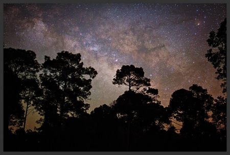 night sky - space, cool, stars, forest, nature, fun