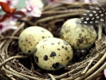 Speckled Spring Eggs