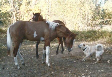 Casey and Gemini - playing tag, horses, dogs