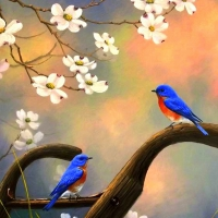Song Birds in Spring