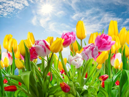 spring city tulips wallpaper - photo #16