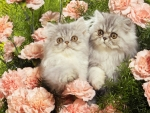 cute grey kittens and pink roses