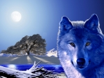 Blue Wolf Winter