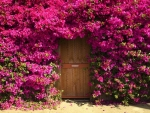 Blooming Door Cover