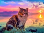 Cute Cat Sunset