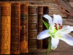 White Lily & the Books