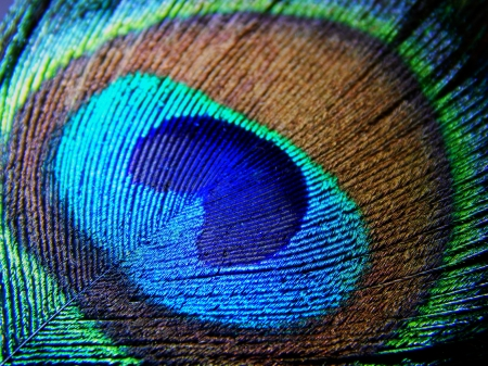 Peacock feather - Textures & Abstract Background ...