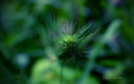 Mystery - wallpaper, photography, abstract, summer, nature, plant, macro, grass, close-up, spring