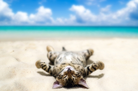 Sunbathing Kitten - holidays, animals, animal, beach, sunbath, vacation, SkyPhoenixX1, kittens, sunbathing, sky, cats, shore, coast, cute, waves, sand, relaxing, clouds, kitten, cat, sunshine, sun, sea, kitty, sweet, ocean