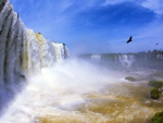 Birds Flying Near Iguazu Waterfall, Argentina